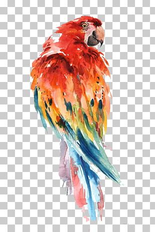 Parrot Watercolor Painting Bird Drawing Art PNG