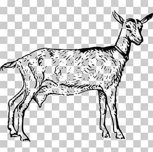 Boer Goat Black Bengal Goat Poitou Goat Russian White Goat Sheep PNG