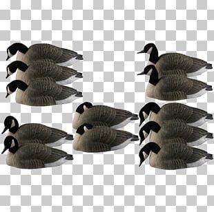 Canada Goose Duck Mallard Decoy PNG