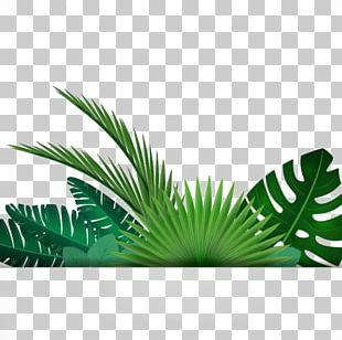 Leaf Tropics PNG