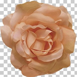 Flower Rose Petal Color Peach PNG