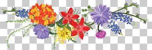 Floral Design Illustration Flowering Plant Plants PNG