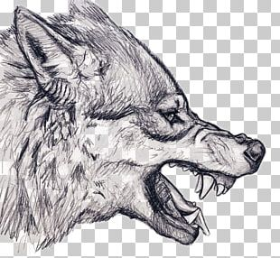 Gray Wolf Drawing Snarl Art Sketch PNG