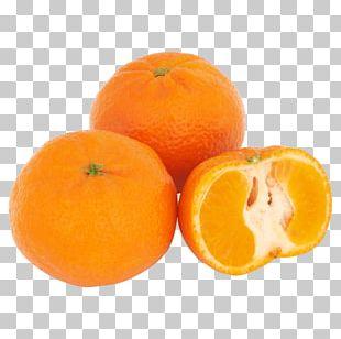 Clementine Malta Warehouse Tangerine Mandarin Orange Tangelo PNG