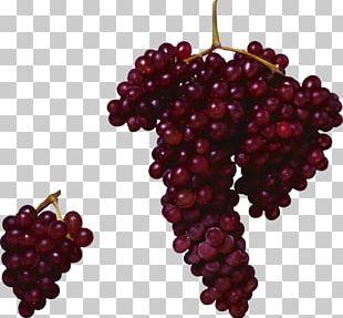 Common Grape Vine Zante Currant Grape Seed Oil PNG