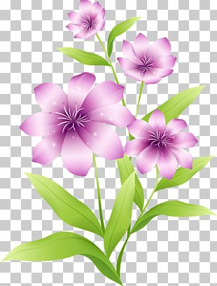 Flower Pink Purple PNG