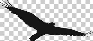 Hawk Open Accipitriformes PNG