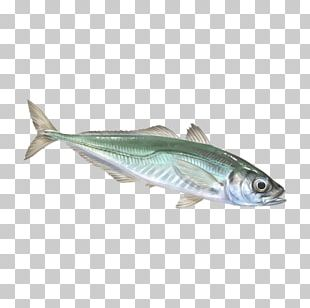 Sardine Mackerel Oily Fish Fish Products PNG