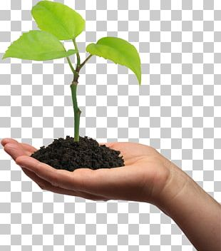 Plant Cell Seedling Gum Arabic Tree Pea PNG