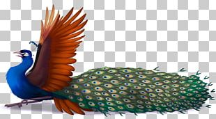 Bird Asiatic Peafowl Drawing Galliformes PNG