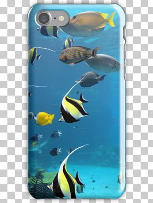 Coral Reef Fish Marine Biology Ecosystem Underwater Marine Mammal PNG