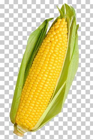 Organic Food Vegetable Maize Baby Corn Sweet Corn PNG