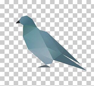 Beak Goose Cygnini Duck Bird PNG