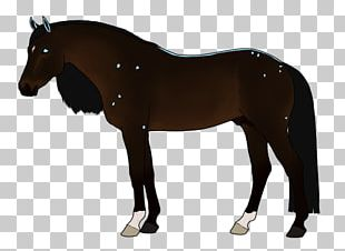 Horse Tack Stallion Pony Bridle PNG