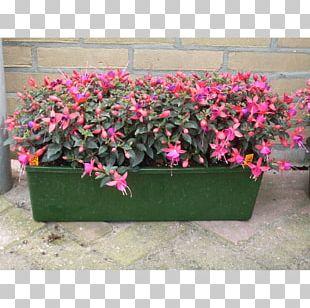Flowerpot Pink M Houseplant RTV Pink PNG