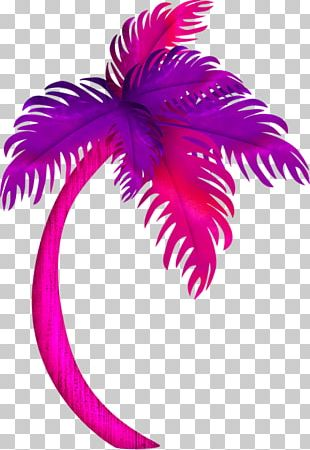 Tree Coconut PNG