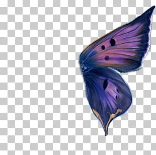 Ulysses Butterfly Wing Paper PNG