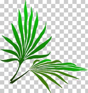 Sukkot Palm Branch PNG