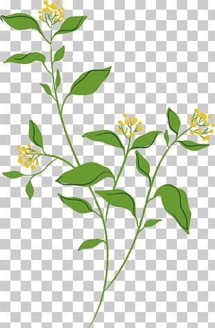 Spring Flower . PNG