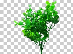 JMC Floral Artificial Flower Wholesale Plant Stem Sydney PNG