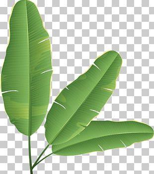 Banana Leaf Banana Bread PNG