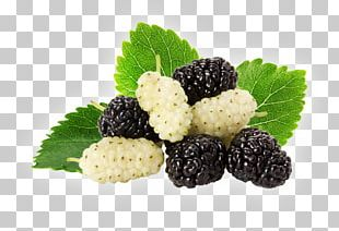 Black Mulberry White Mulberry Stock Photography PNG