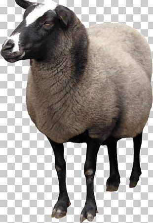 Sheep Wiki Computer File PNG