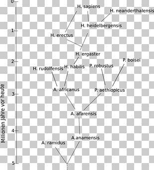 Homo Sapiens Human Evolution Upright Man Family Tree PNG