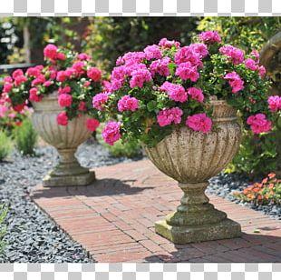 Annual Plant Garden Flowerpot Geraniums Floristry PNG