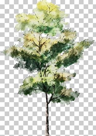 Tree Watercolor Painting Drawing Architecture Sketch PNG