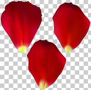 Rose Computer Icons Painting PNG