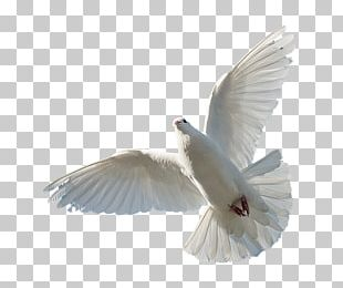Holy Spirit Bible Trinity God PNG