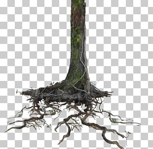 Trunk Tree Root Portable Network Graphics PNG