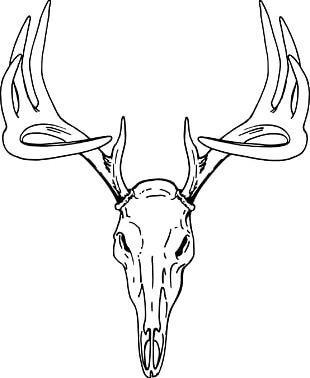 White-tailed Deer Elk Red Deer PNG