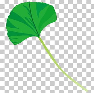 Leaf Plant Stem Line Tree PNG