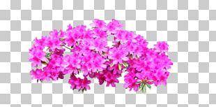 Azalea Shrub Portable Network Graphics Rhododendron Adobe Photoshop PNG