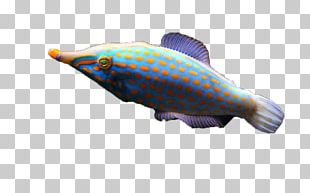 Deep Sea Fish Marine Biology PNG