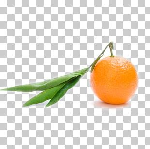 Orange Juice Clementine Orange S.A. Mandarin Orange PNG