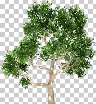 Tree Portable Network Graphics Shrub Encapsulated PostScript PNG