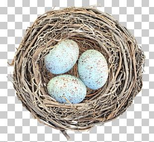 Bird Nest Egg PNG