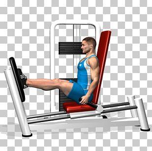 Leg Press Human Leg Muscle Calf Raises Squat PNG