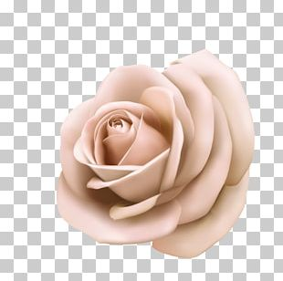 Rose Pink Poster Stock Photography PNG