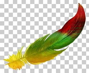 The Floating Feather Drawing Watercolor Painting PNG