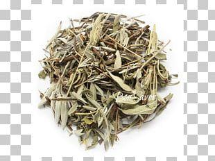 Darjeeling Tea White Tea Nilgiri Tea Mein Teekontor PNG