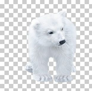 Polar Bear Arctic Fox PNG