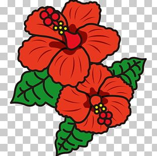 Hibiscus Flower Template Png Images Hibiscus Flower Template
