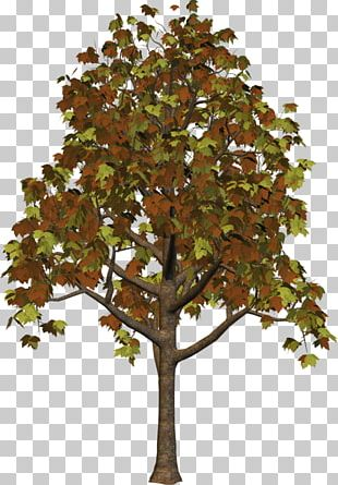 Branch Trunk Leaf Plane Trees PNG