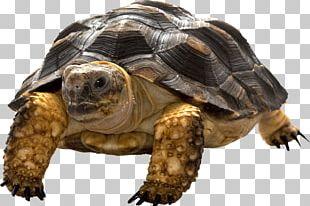 Sea Turtle Animal Computer Icons PNG