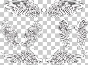 Angel Wing Bird Feather PNG