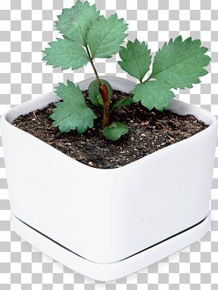 Flowerpot Leaf Houseplant Tree Herb PNG